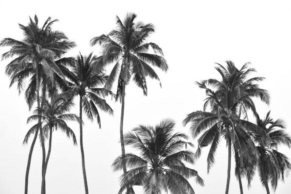 Palm Trees Fabric Back Drop